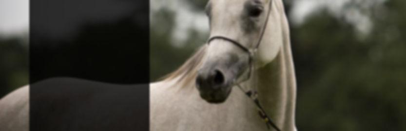 horse banner.jpg