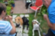 off leash k9 training franchise cost, instinct dog training franchise, dog coach franchise, easy entry franchise, low cost franchise, franchise opportunity, buy a franchise, buy canine franchise, canine training franchise, franchise today