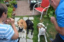 seattle dog training, dog training puget sound, doggy daycare seattle, dog daycare seattle, tacoma dog daycare