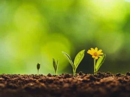 Frühlingsinspiration - Veränderung ist Wachstum