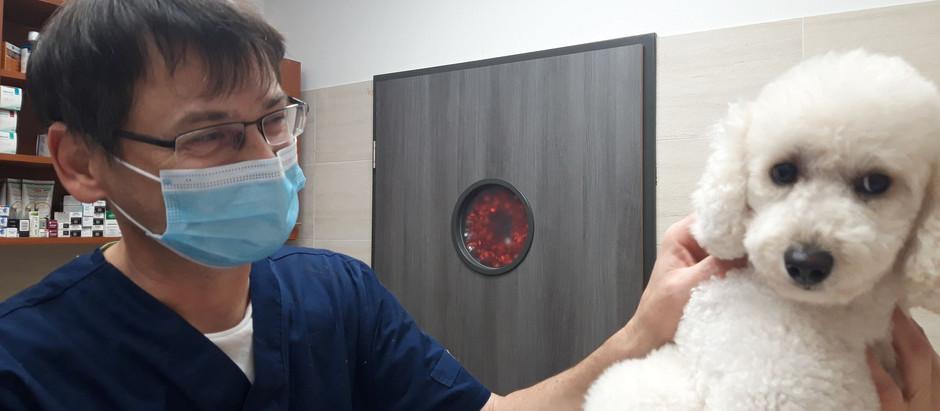 Állatkórházunk másik alapítója - Interjúnk dr. Farkas Zoltán szakállatorvossal