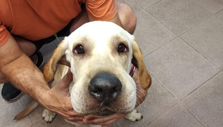 Kutyáink és az allergia – 1. rész