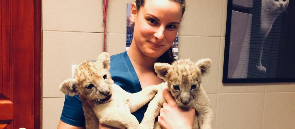 Állatorvosi asszisztenseink - Nélkülözhetetlen társaink a gyógyításban
