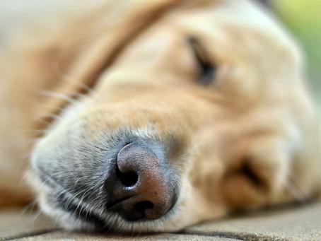 Kutyáink és az öregedés