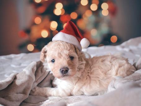 Kutyát karácsonyra – A mi válaszaink a leggyakoribb kérdésekre
