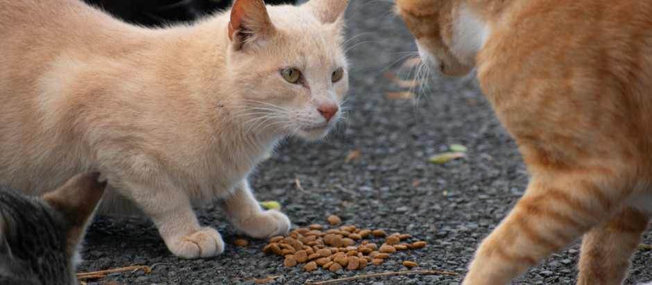 "Mi az a ""macska AIDS""?"