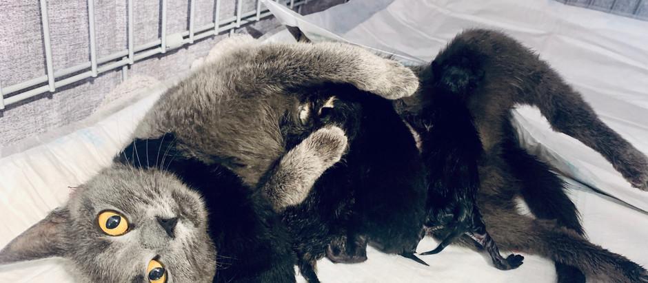 Macskáink belső élősködői