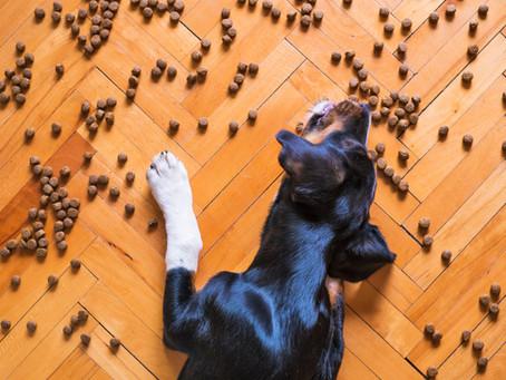 Kutyáink és az allergia – 2. rész