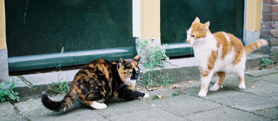 Harcos macskák és a harapott sebek kezelése