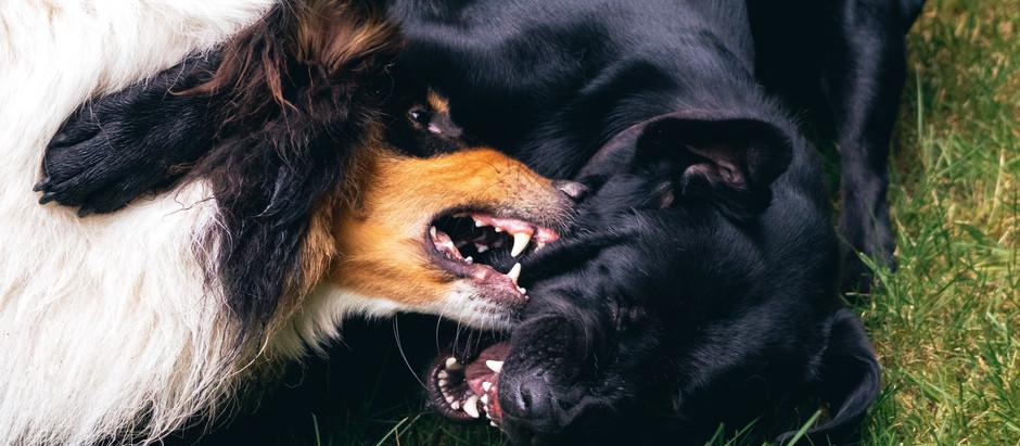 Kutyaharapást – szőrével? Avagy mit tegyünk, ha kutyánknak harapott sebe van?