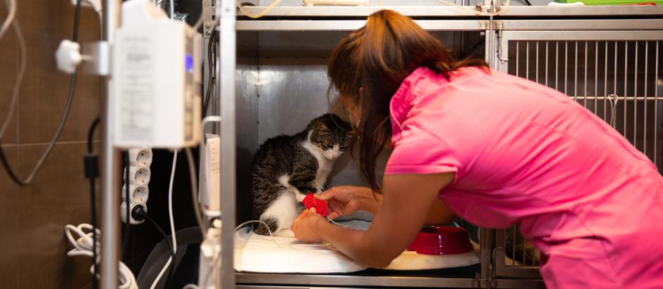 Állati vészhelyzetek, avagy mikor rohanjunk azonnal állatorvoshoz