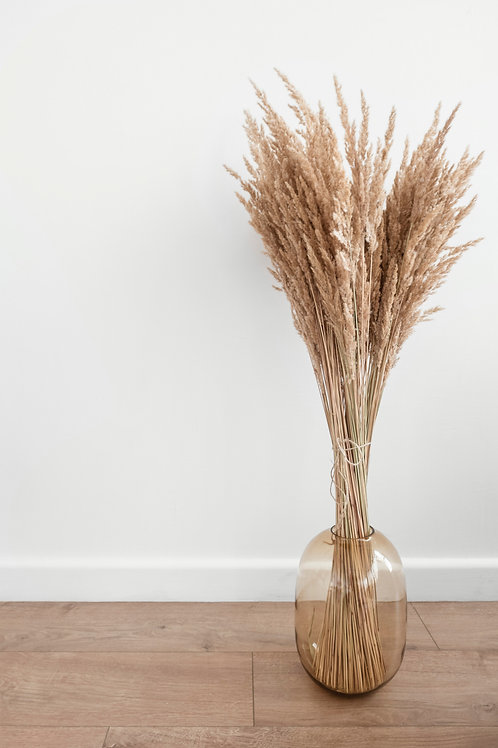 Pampas Grass (Cortaderia) 100cm