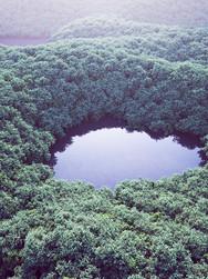 190522-Forest.jpg