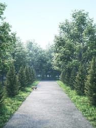 190324-Forest-Road.jpg