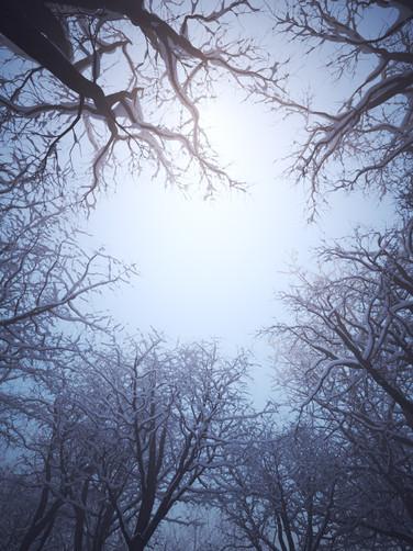 200120-Winter-Forest.jpg