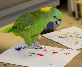 Art is for the Birds