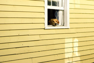 How to Plan for Relocation When You have a Pet