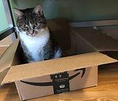 rudy in a box (2).jpg