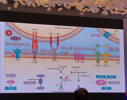 GVHD Agents, Mechanism of Action