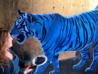 Nouvelle aventure: Le Blue Jungle Book !