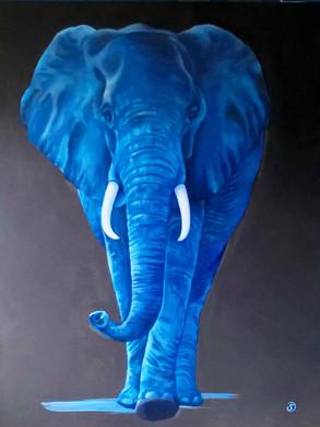 Elephant d'Afrique . Loxodonta . 2,30 m