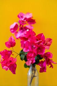 """Pink on Mustard"""