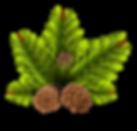 pinheiro-2031696_1920.png