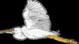 2018-August-14-Heron-Transp.webp