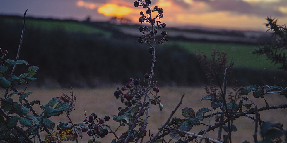 EP02: Home Tapes - Part 2: Local Landscapes in the West of Ireland