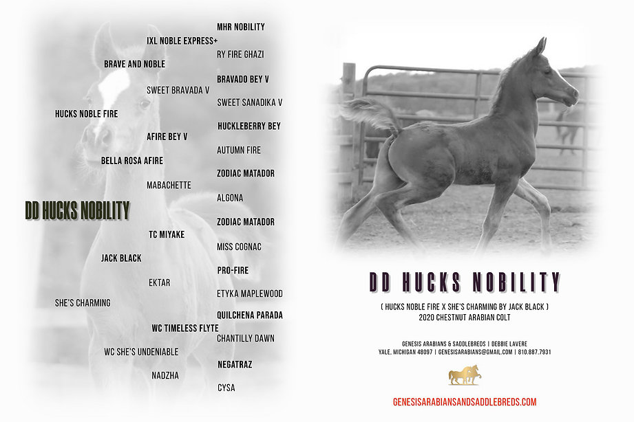 DD Hucks Nobility Pedigree.jpg