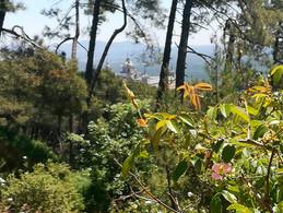 SL-naturaleza-bosques.jpg