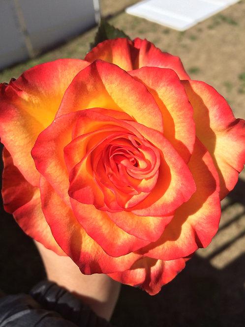 Inner Light Blooming Access