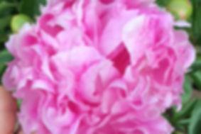 Sweet Soul Flowers