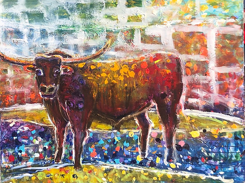Bull 60 x 48