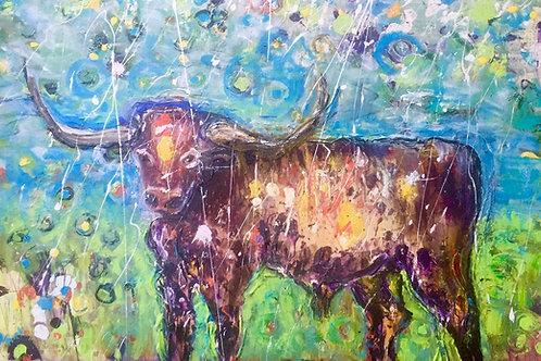Austin the bull