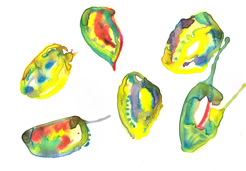 Abalone #4 - Print
