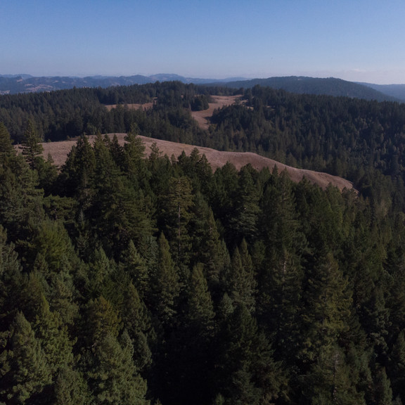 Pachama-Project-RipsRedwoods-Aerial-Road