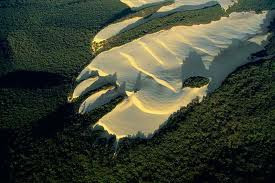 The Hand of Pine Beetles, in the Fraser Experimental Forest, and The Foot of Sand, in Fraser Island,