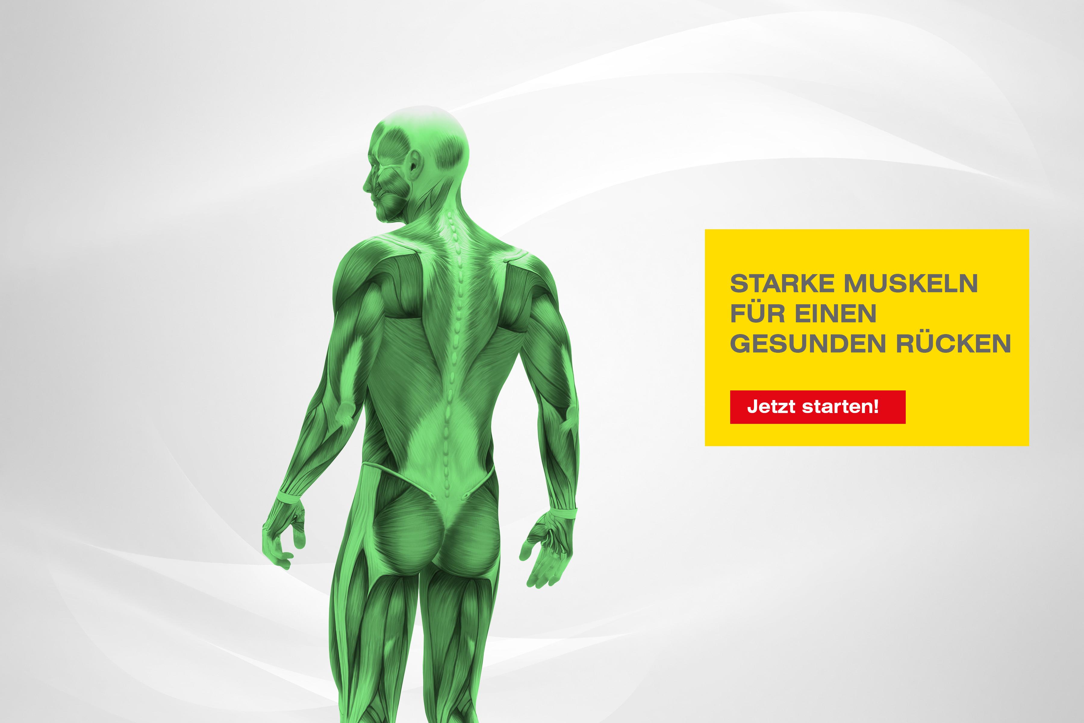 Muskeln Rücken