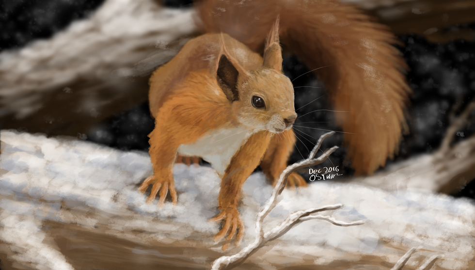 Winter squirrel2016.png