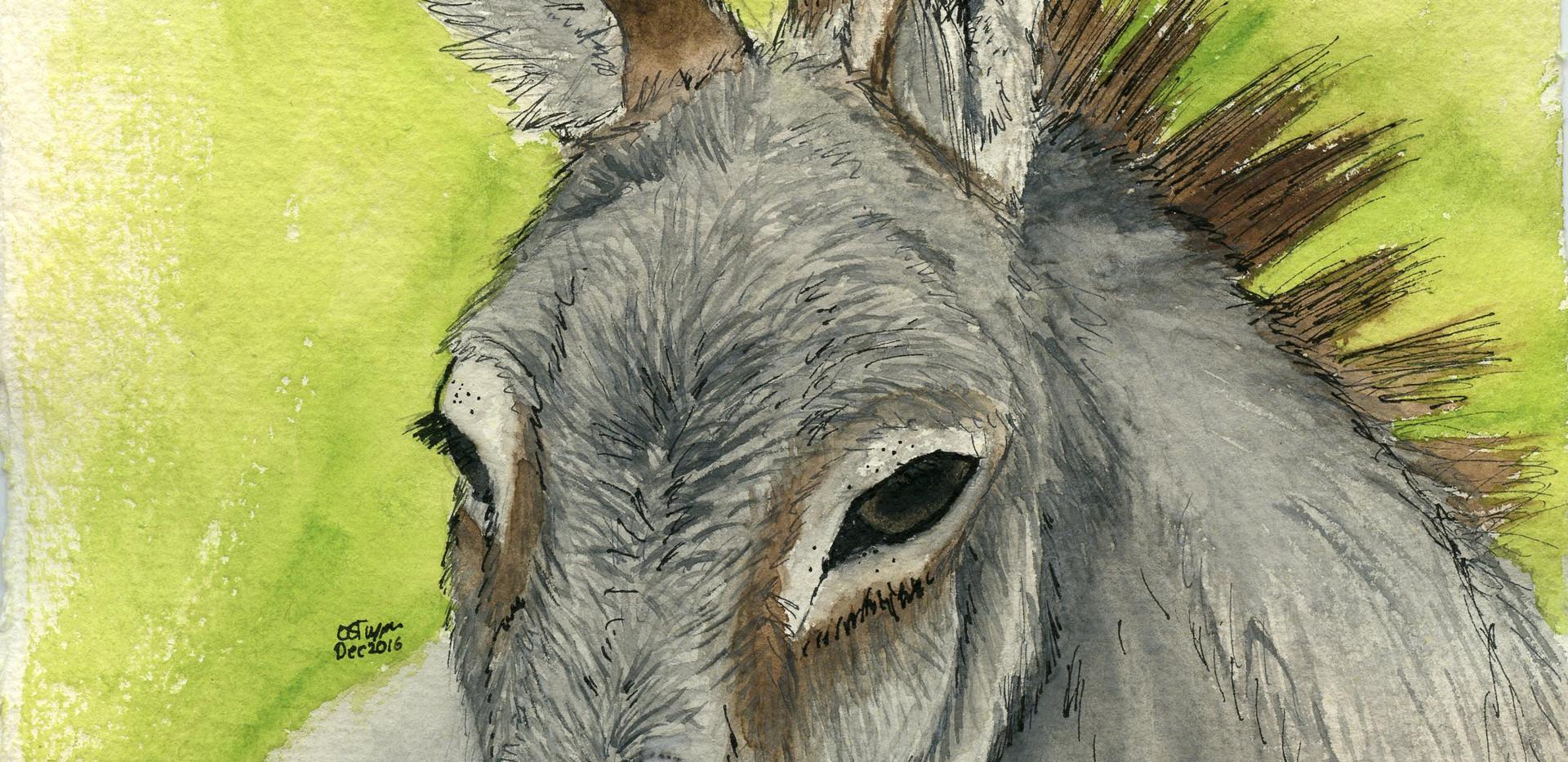 Sue donkey001.jpg