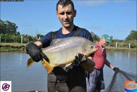 Agrofish Pescados realiza exposição de peixes vivos na Semana Santa