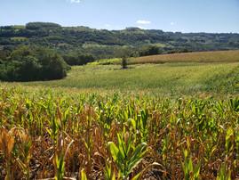 PROAGRO é esperança de agricultores para amenizar perdas da estiagem