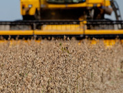 Plano Safra 2021/2022 deve injetar R$ 251 bilhões na agricultura