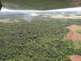 Fiscais agropecuários monitoram ocorrência de gafanhotos no RS