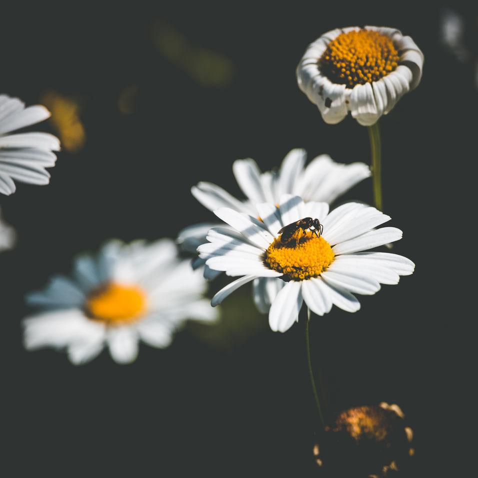 macro su fiore e ape
