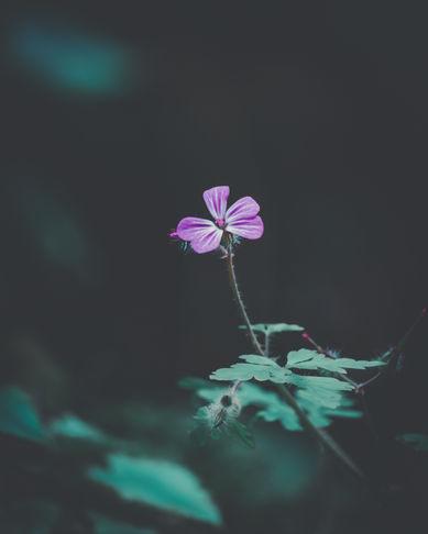 macro fiore