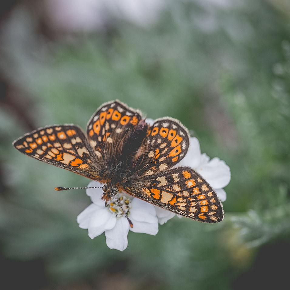 macro su farfalla