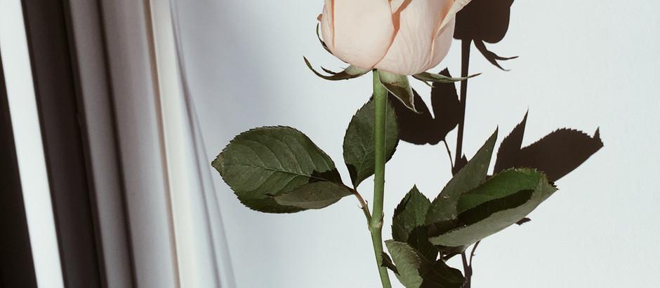 Rosesrevolutionday