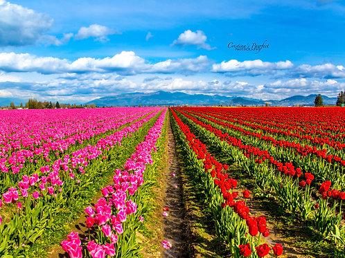 Tulips 8X10 Mat